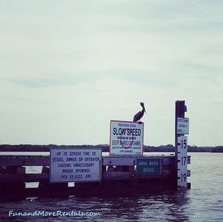 Anna Maria Island - wildlife pelican - jc